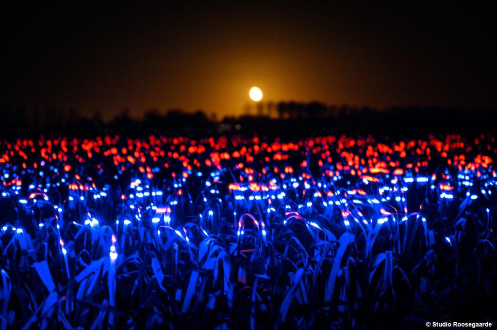 grow light installation daan roosegaarde